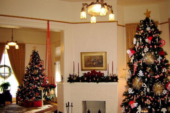 Scottsdale Christmas Trees