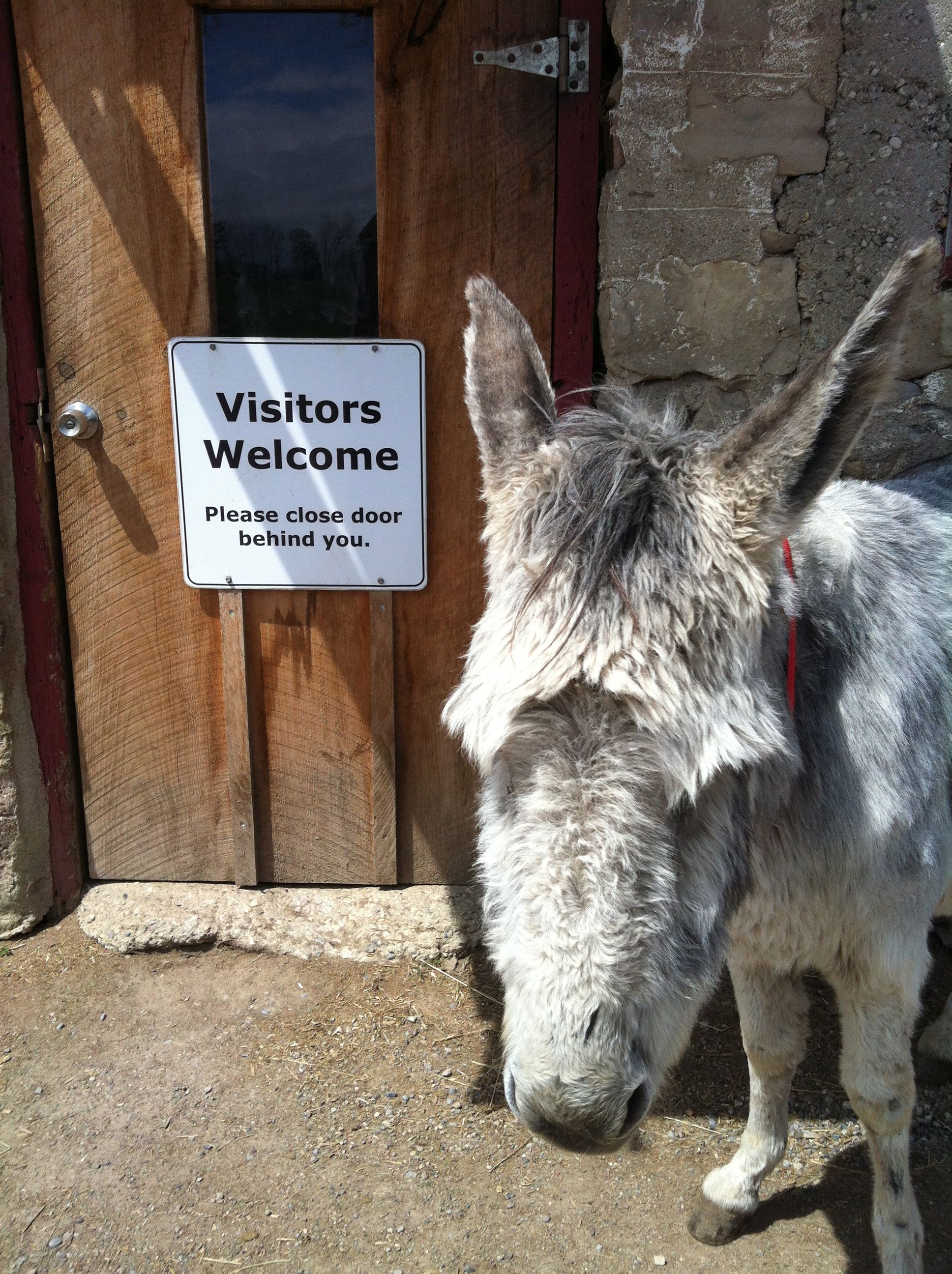 Second Chance Auto >> Donkey Sanctuary of Canada, Guelph, Ontario