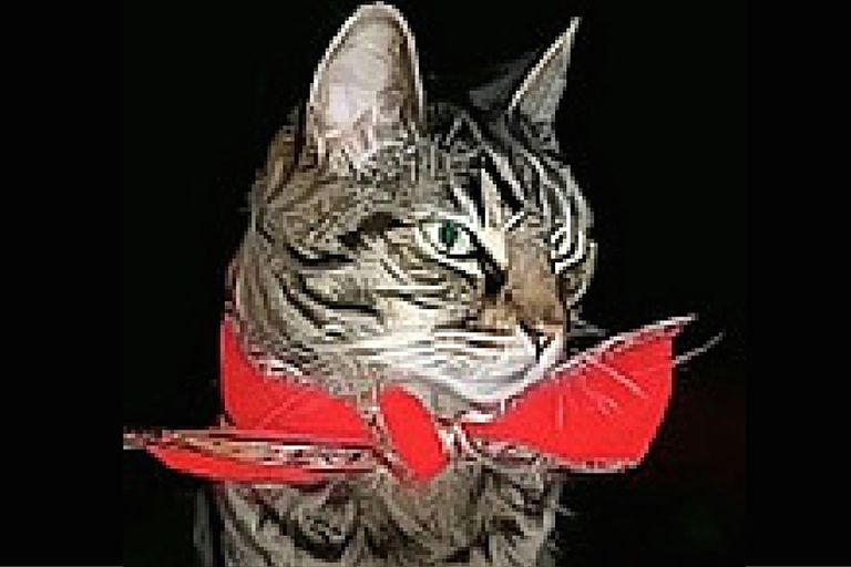 Tabby Cat with Red Ribbon Around Neck