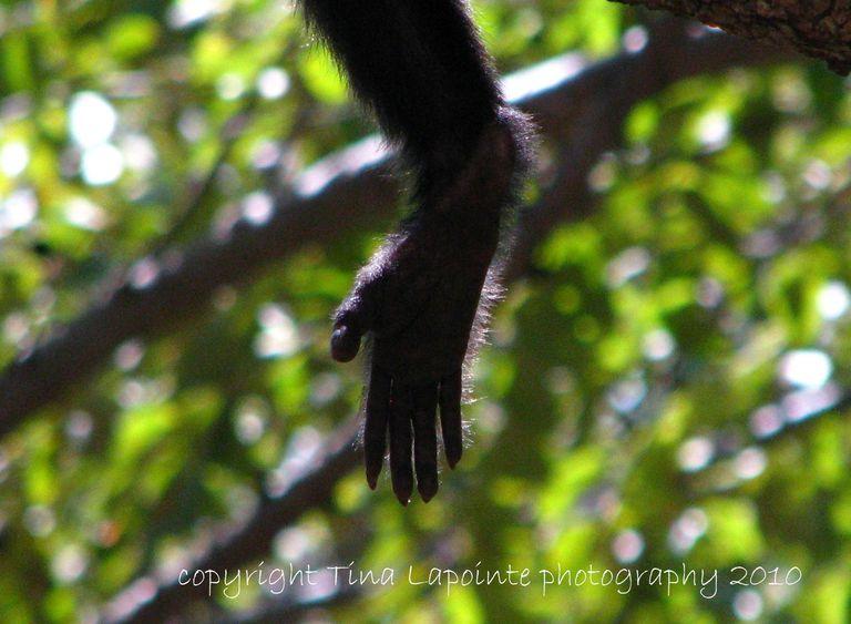 A monkey's paw.