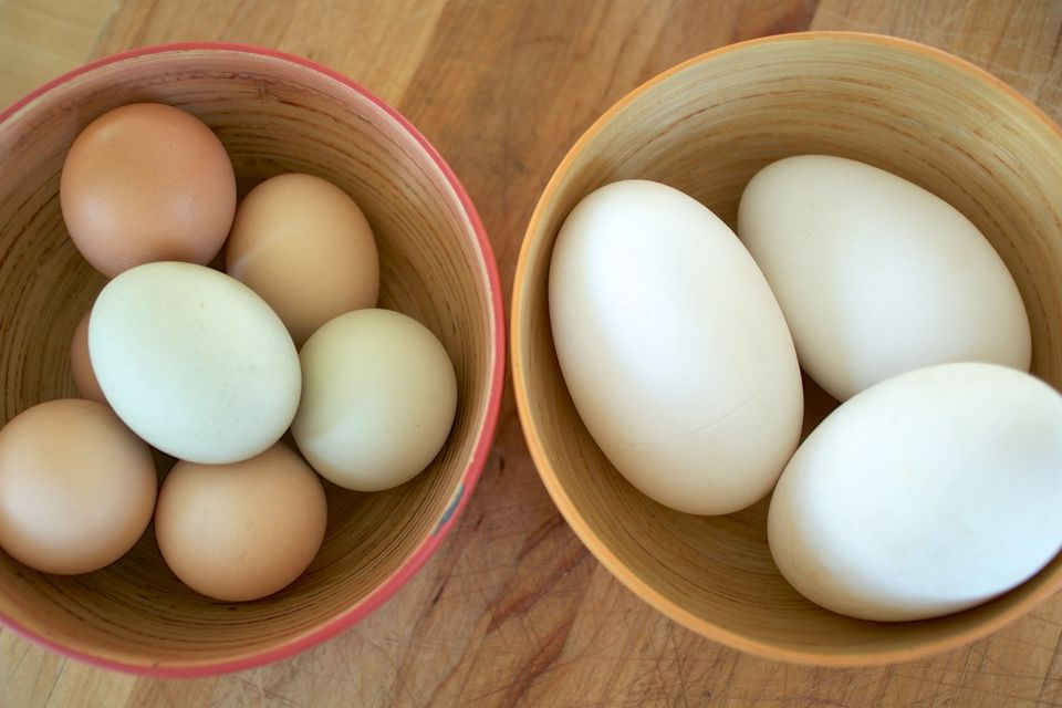 Goose Eggs (With Chicken Egg for Comparison)