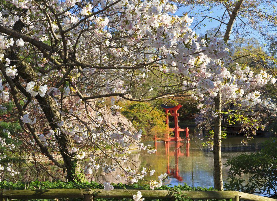 Shinto Shrine in Spring