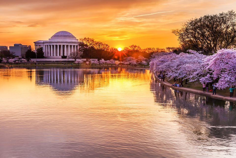 Cherry blossoms along the tidal pool in Washington, DC