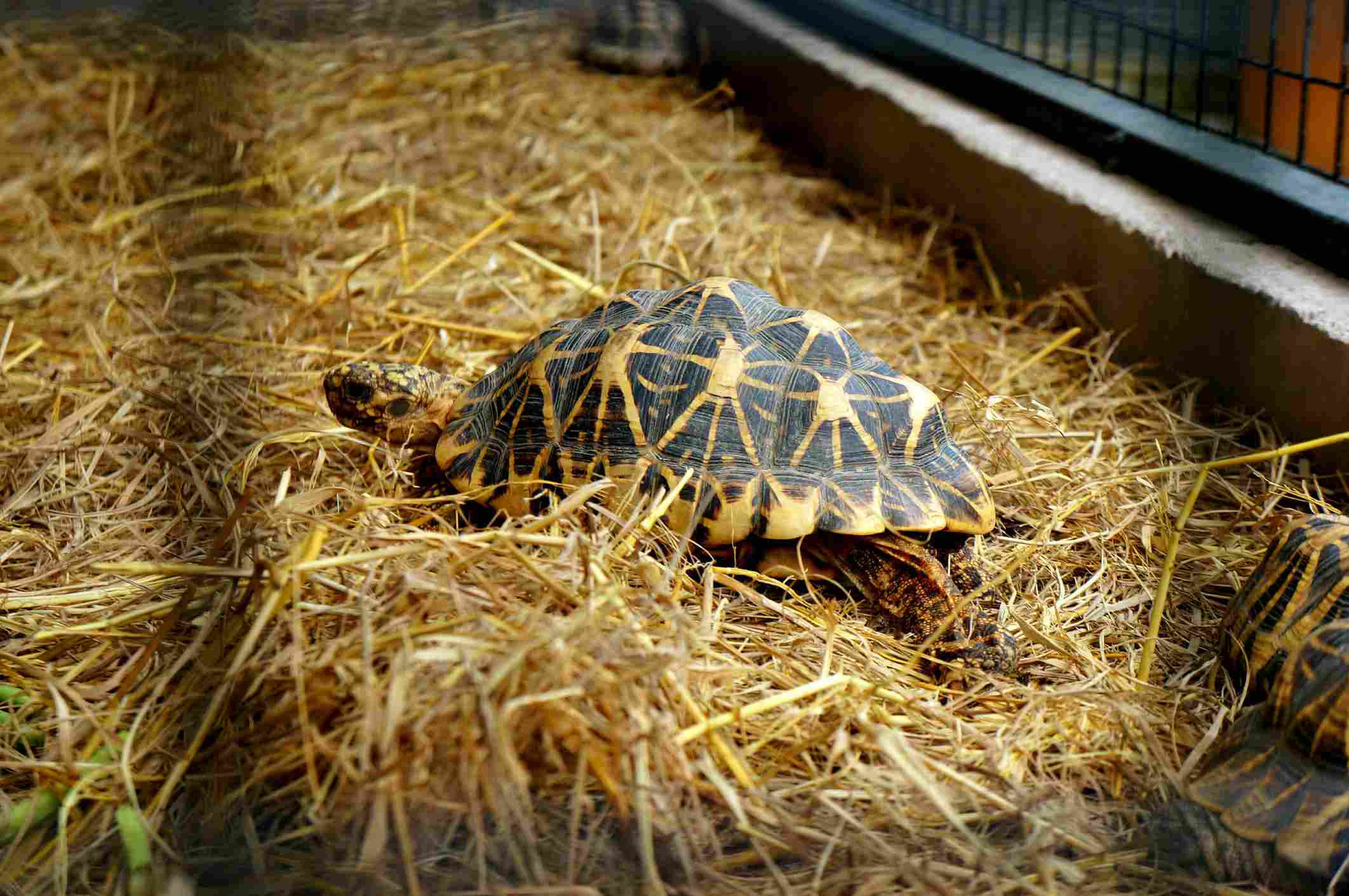 How to Take Care of Turtles and Tortoises