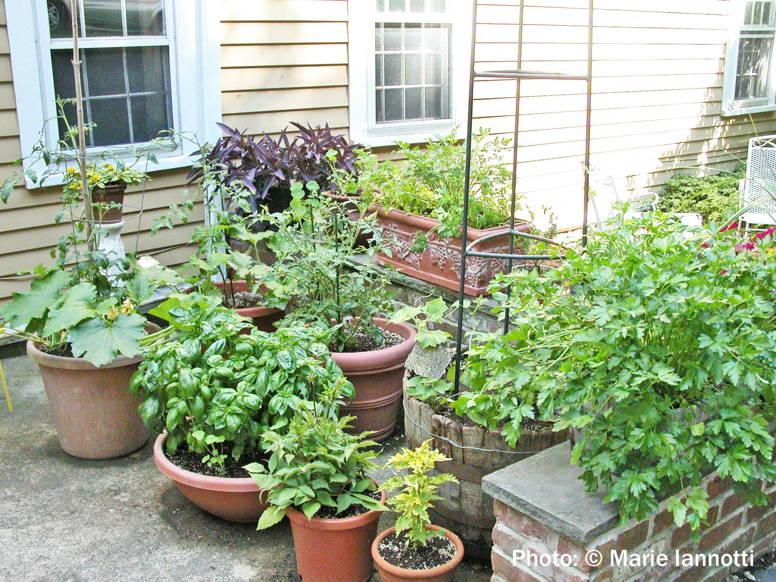 Vegetable gardening in containers and small spaces - Vegetable garden in small space decoration ...