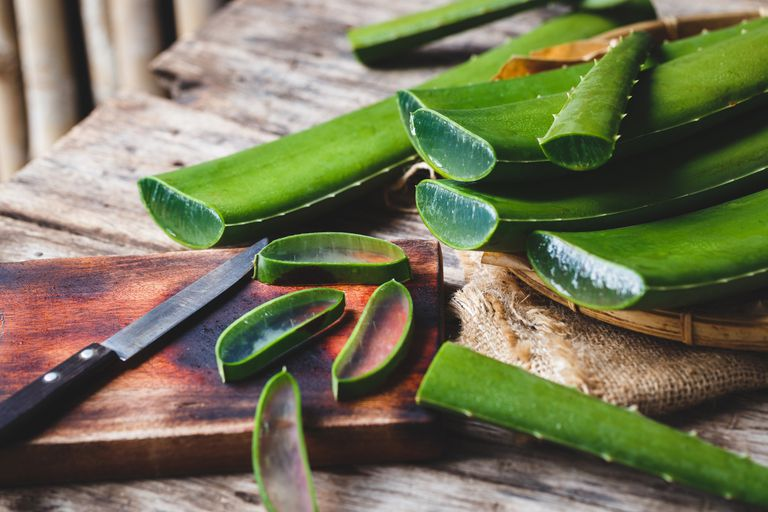 Close Up Of aloe Leaves