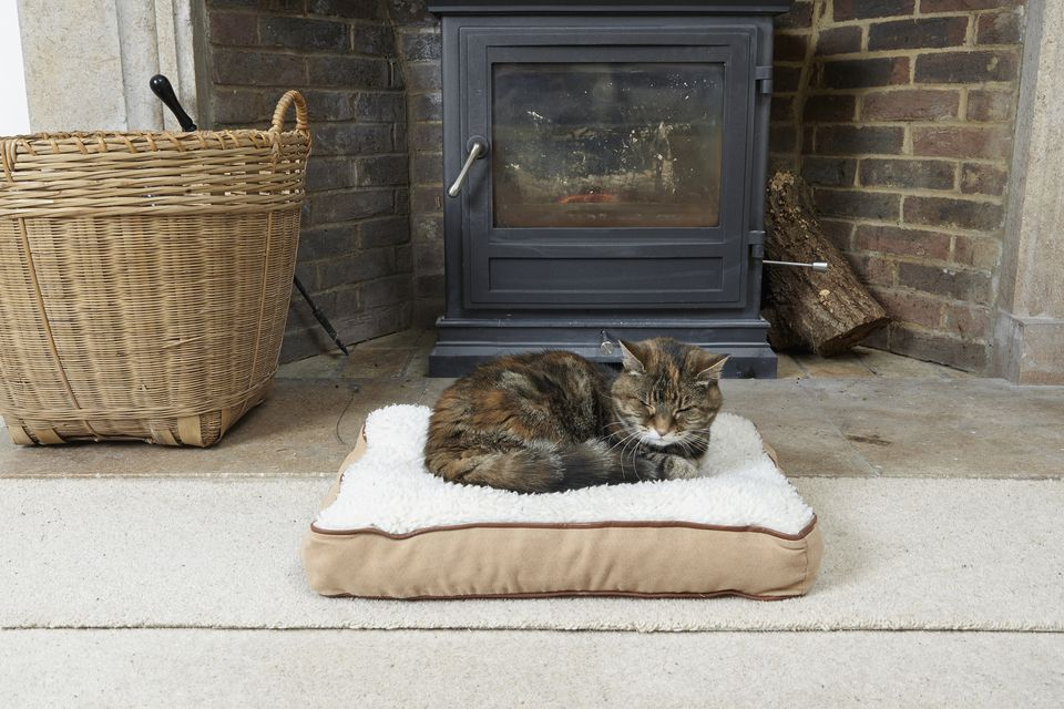Cat in front of a fireplace