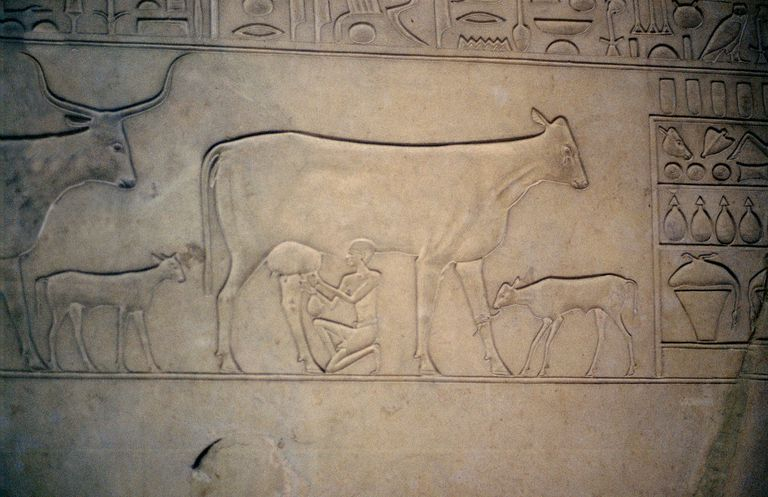 Cow and Calf: Middle Kingdom Egypt Sarcophagus