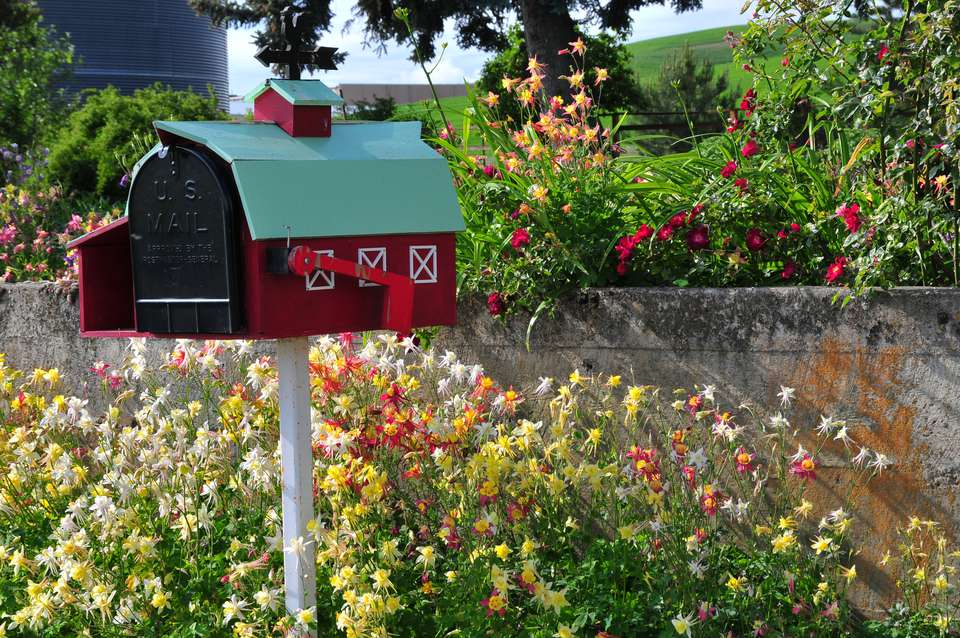Columbines are tough enough to grow around mailboxes.