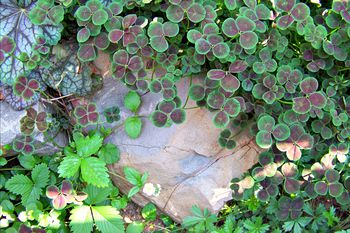Flowering Ground Covers Pictures and Growing Tips