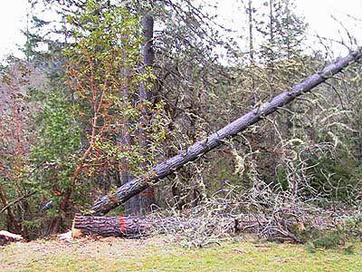 The Falling Tree