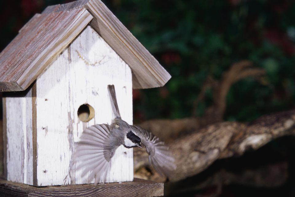 When Birds Use Bird Houses