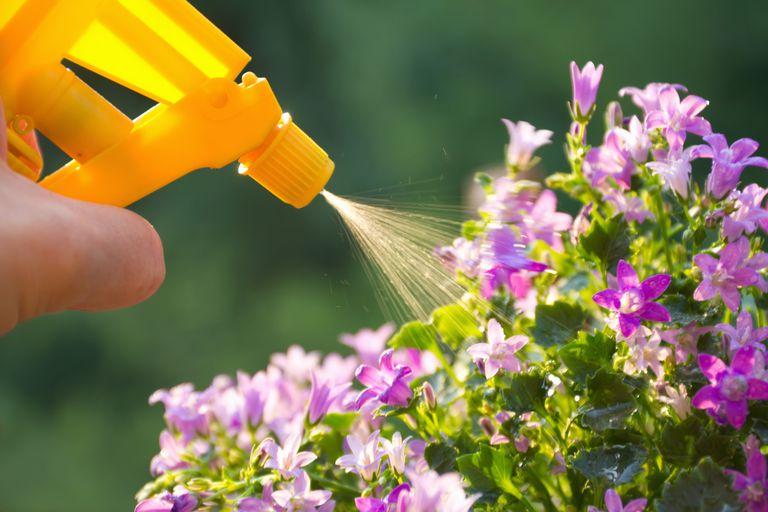 Spraying pesticides.