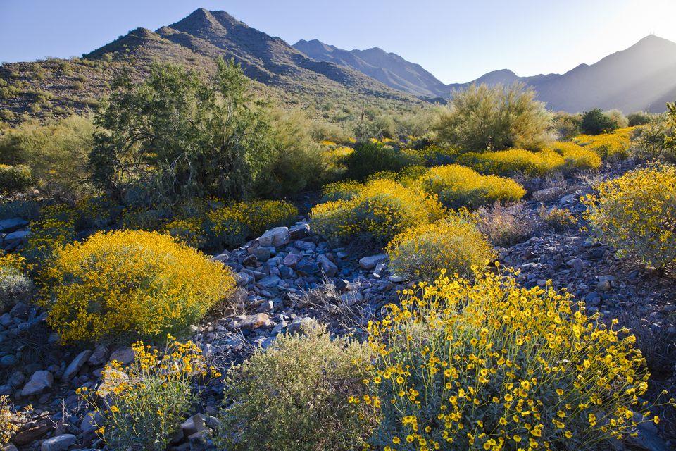 Flowers in Scottsdale