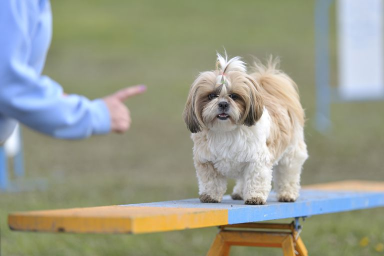 person pointing at dog on see-saw