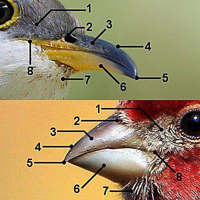 Bird Bill Parts    Diagram