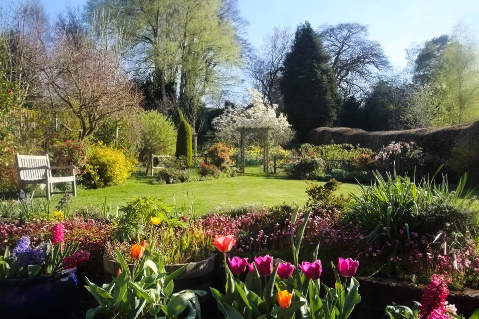 Domestic English garden full of flowers in spring.