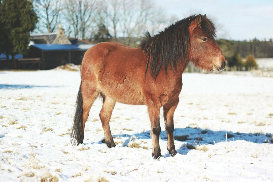 Horse On Snow Covered Field On Sunny Day