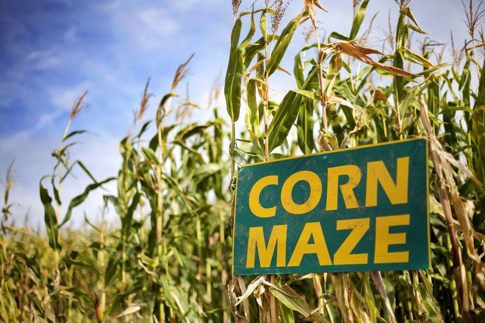 Image result for corn maze