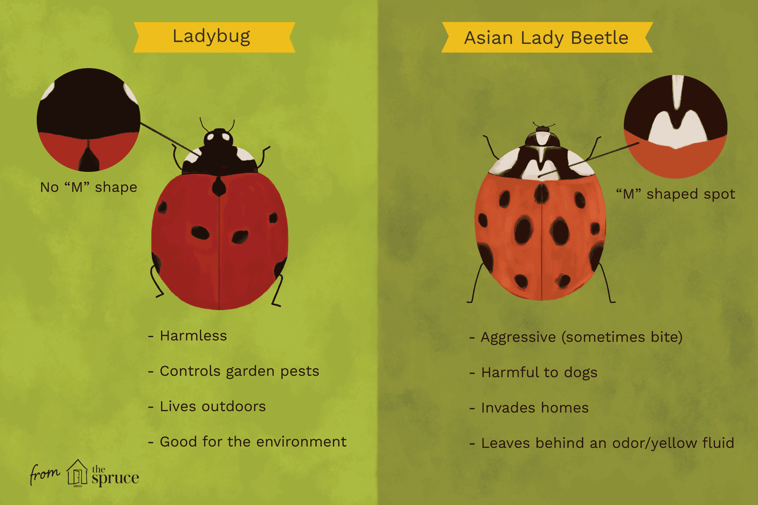 Mealy Bugs and Scales Information  PEST PRODUCTS