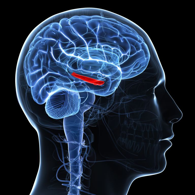 Changes in the brain lead to REM behavior disorder and other conditions