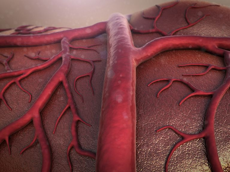 diagram of a blood vessel with branches