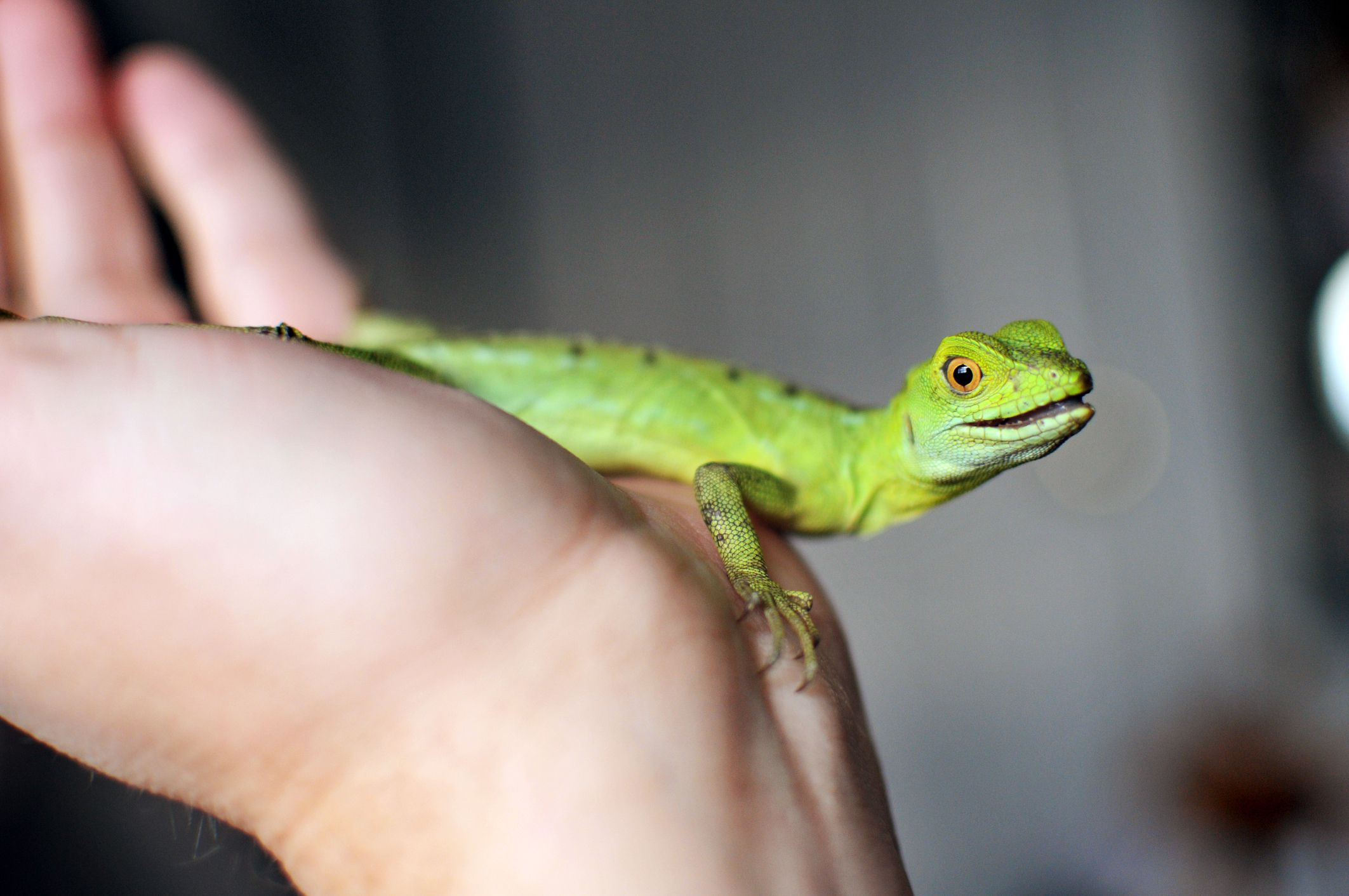 how do you pick a pet reptile