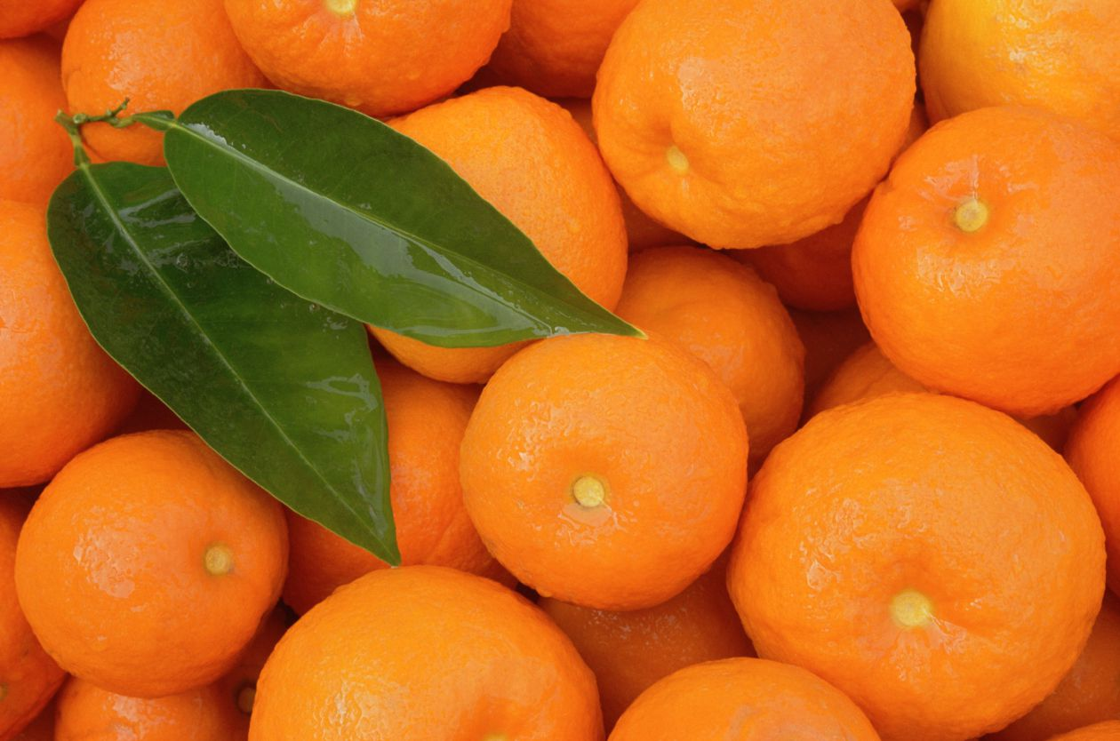 guide to orange and tangerine types