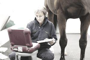 An equine vet tech prepares for an ultrasound