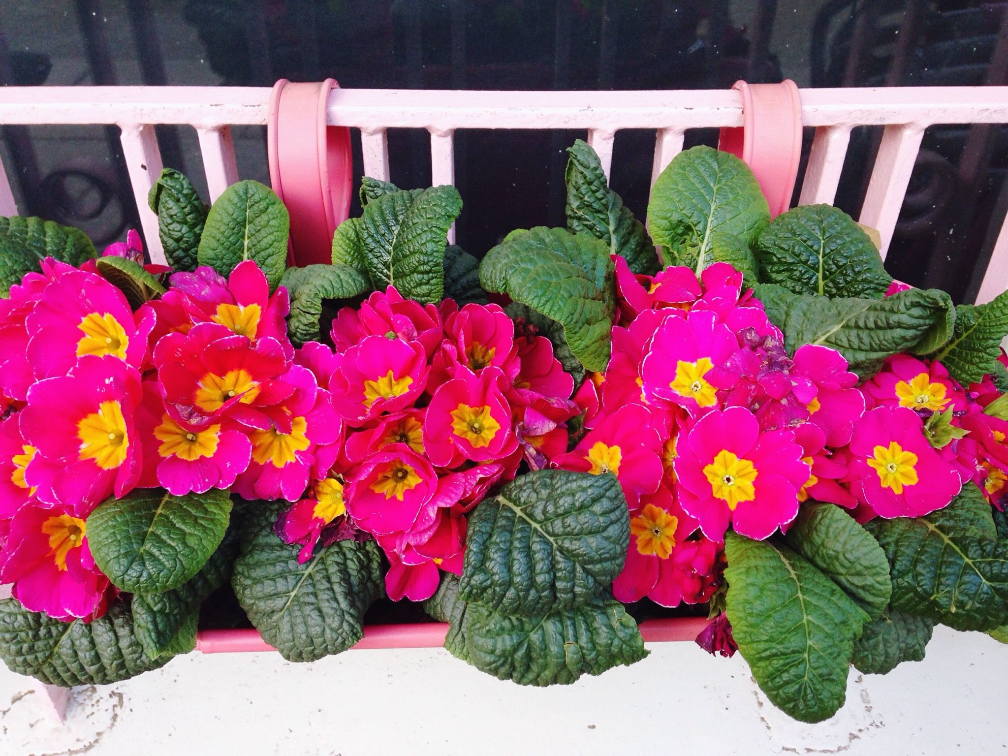 Window Box Flowers for Shade