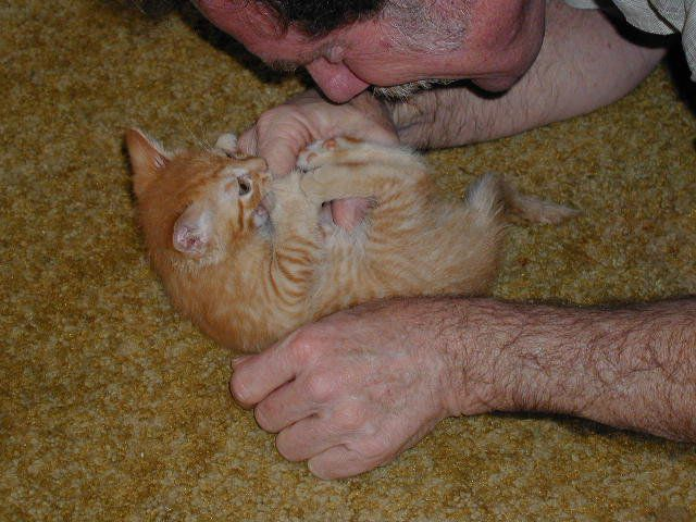 How To Stop Kitten S Scratching And Biting Behavior