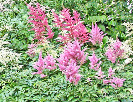 Perennial plants to garden prune in the spring for No maintenance flowering shrubs