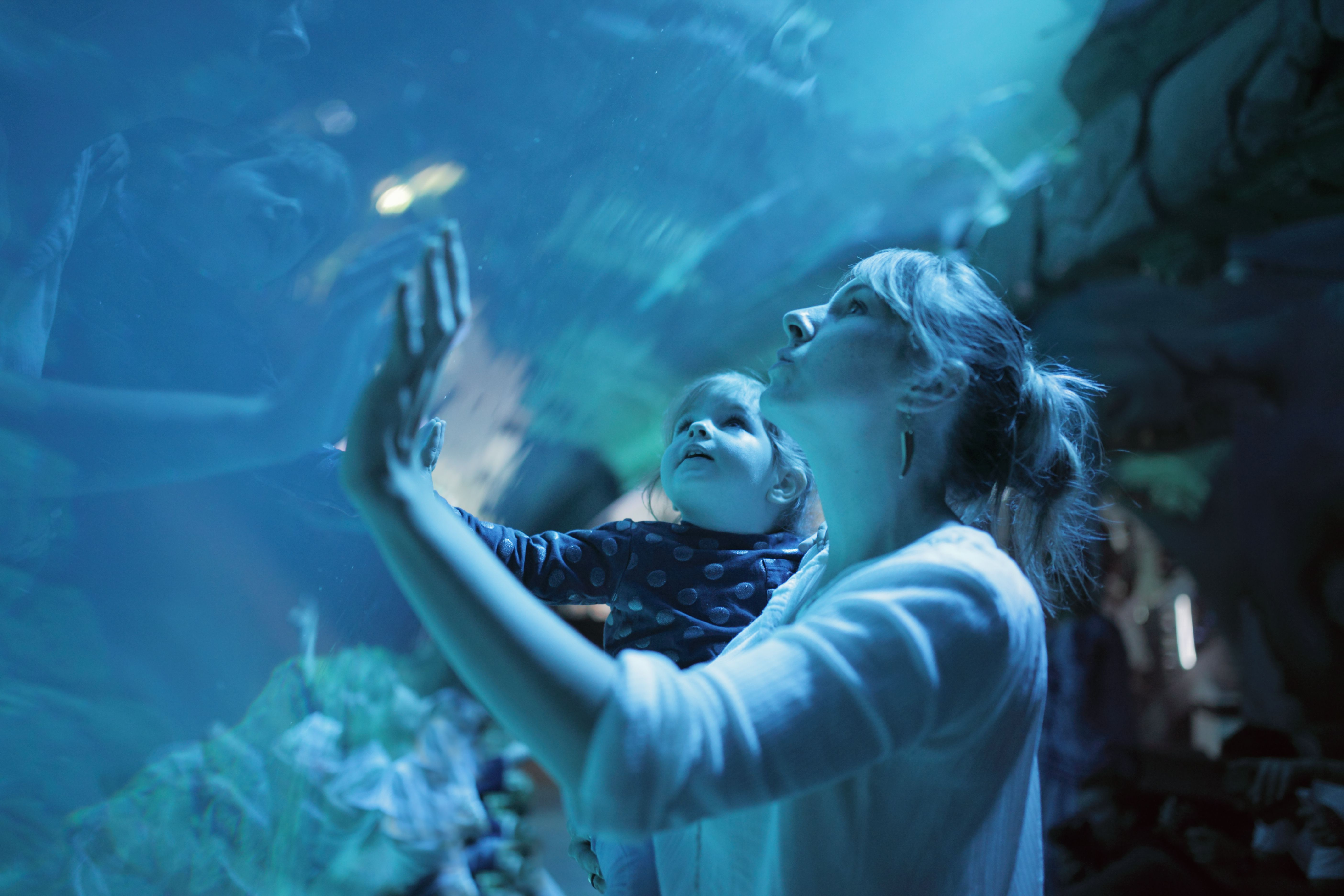 Visiting the Top 6 Aquariums in Texas