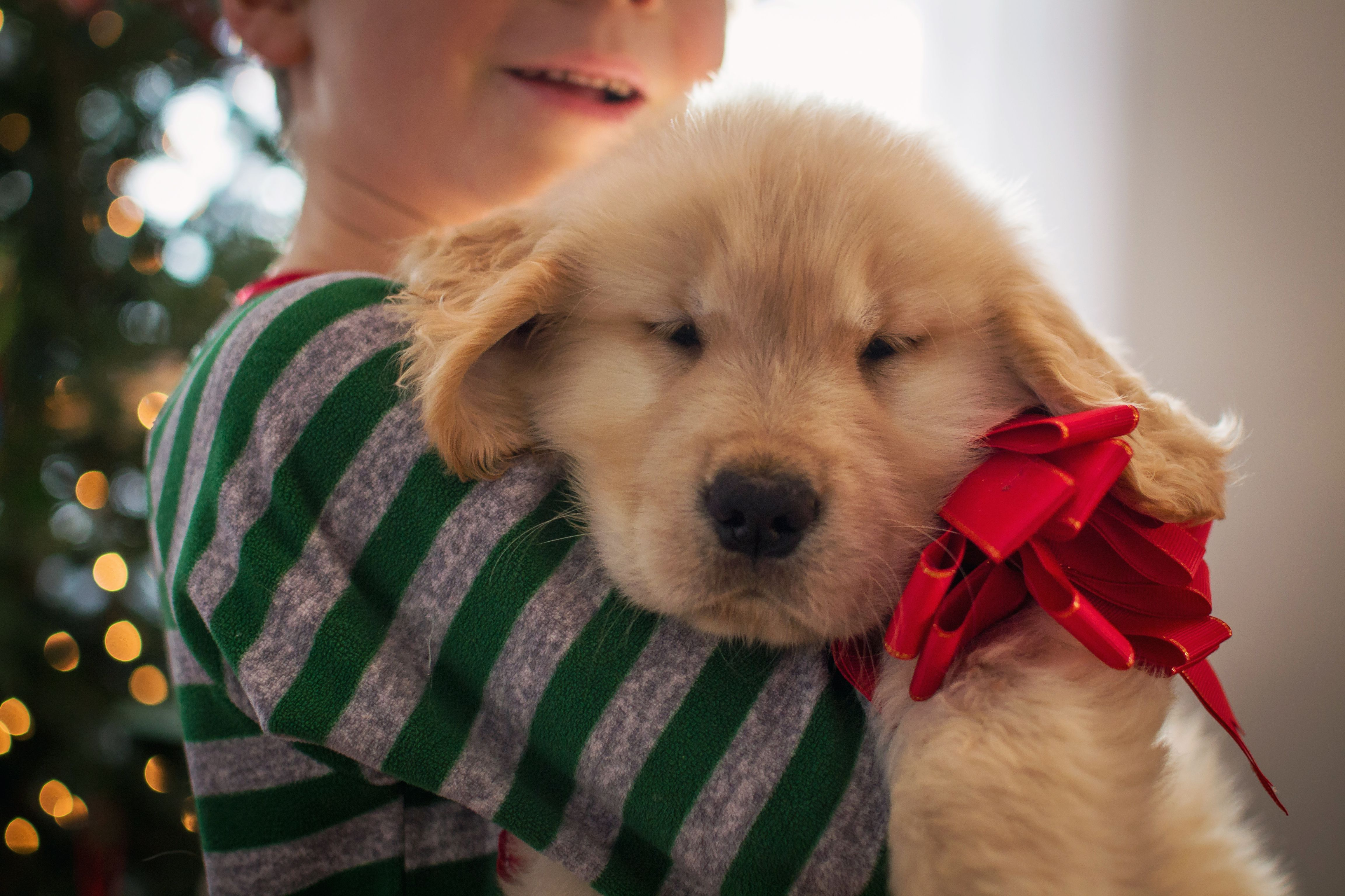 Popular and Homemade Toys To Bring Your Puppy Joy