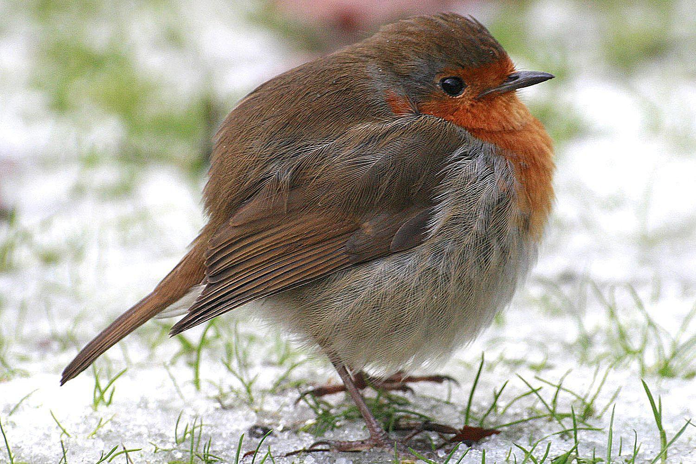 how do birds keep warm in winter