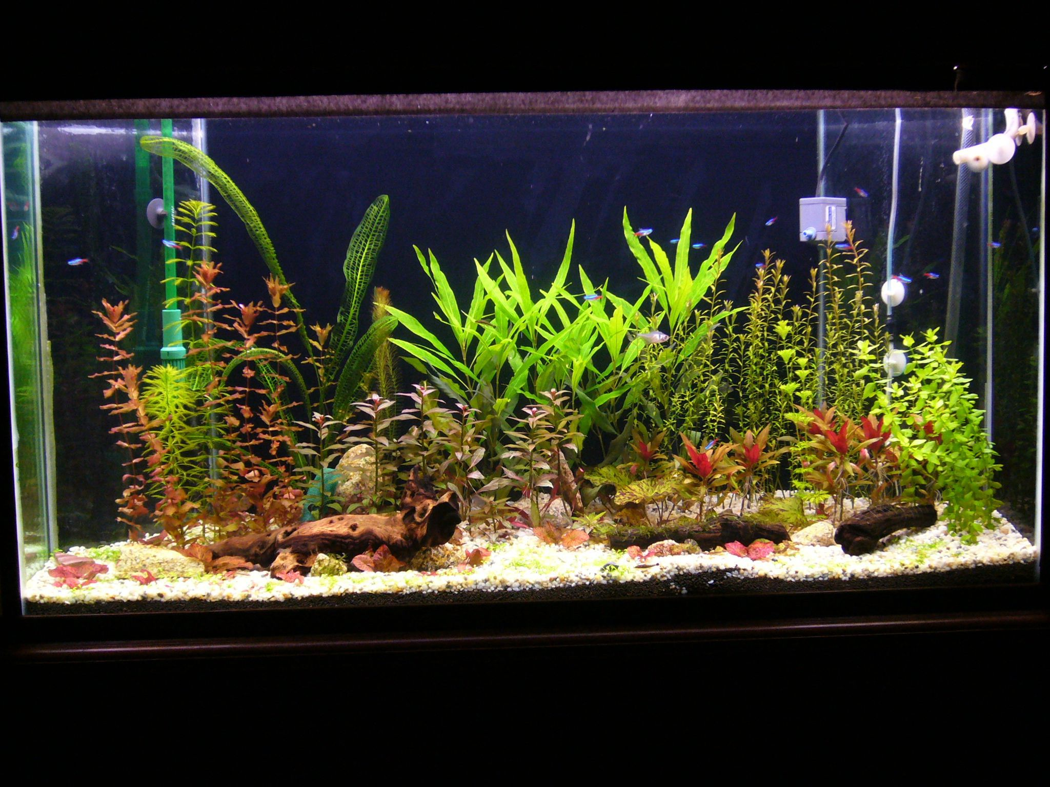 aquarium plants real or artificial