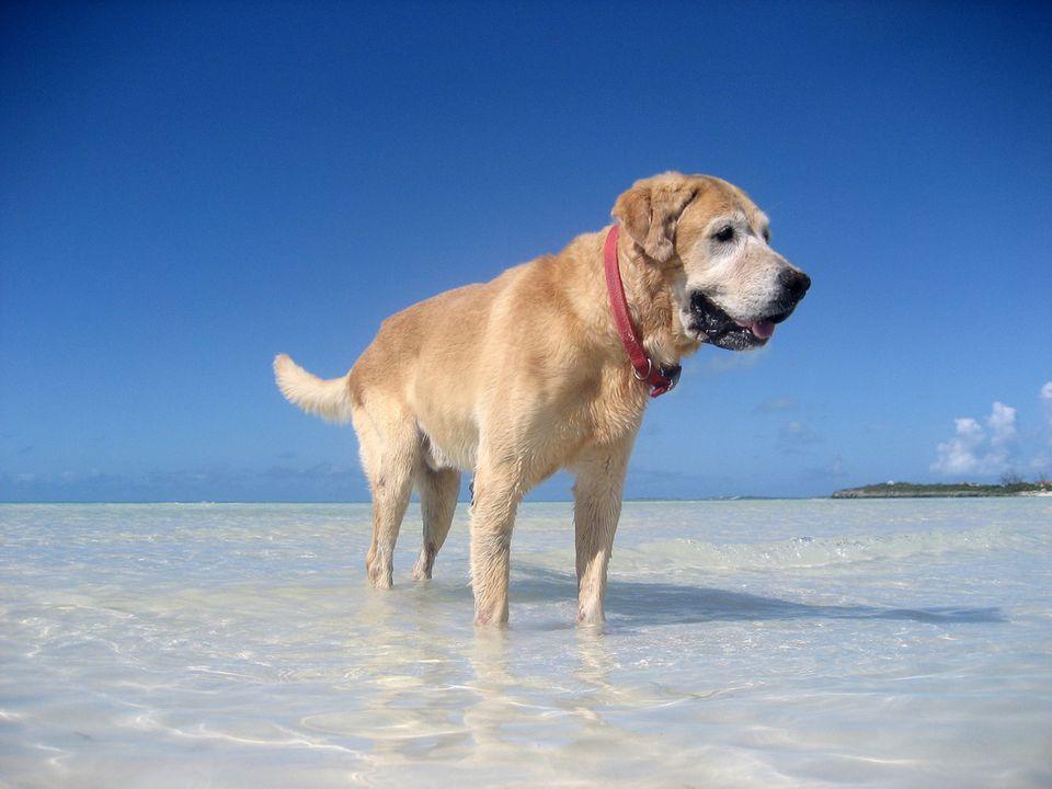 Dog on a Turks & Caicos beach
