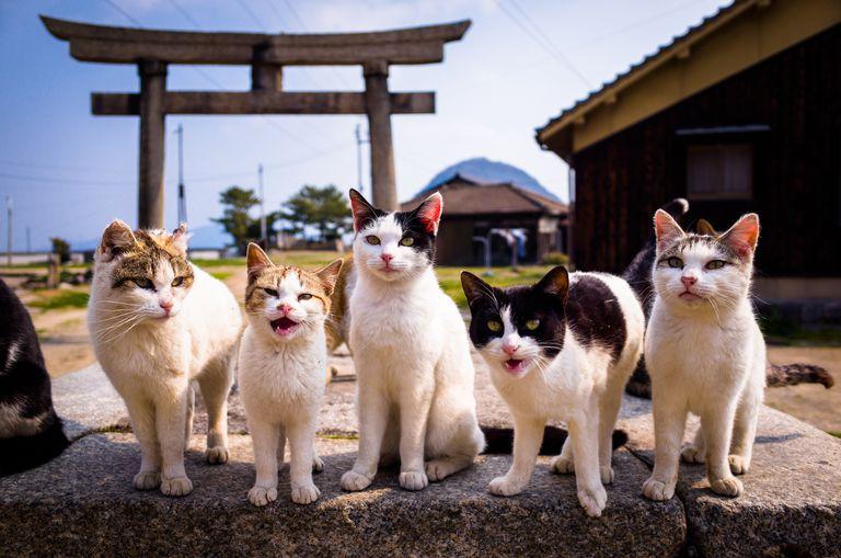 Cats on Sanagi Island, Kagawa