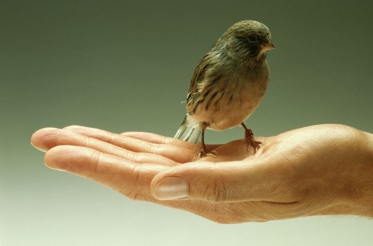 Sparrow in the hand