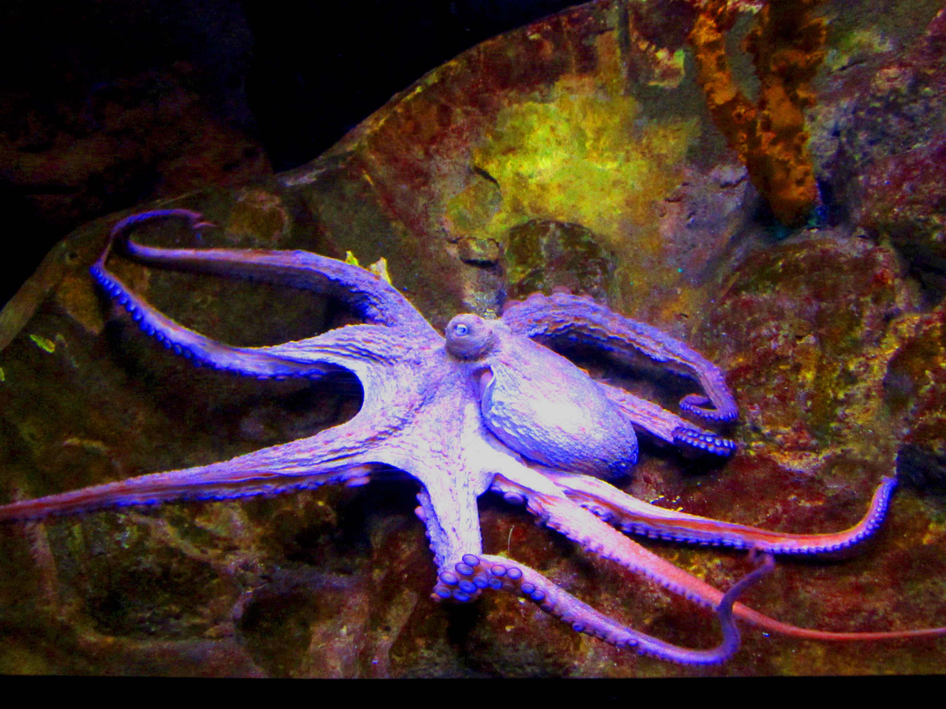 10 fascinating octopus facts