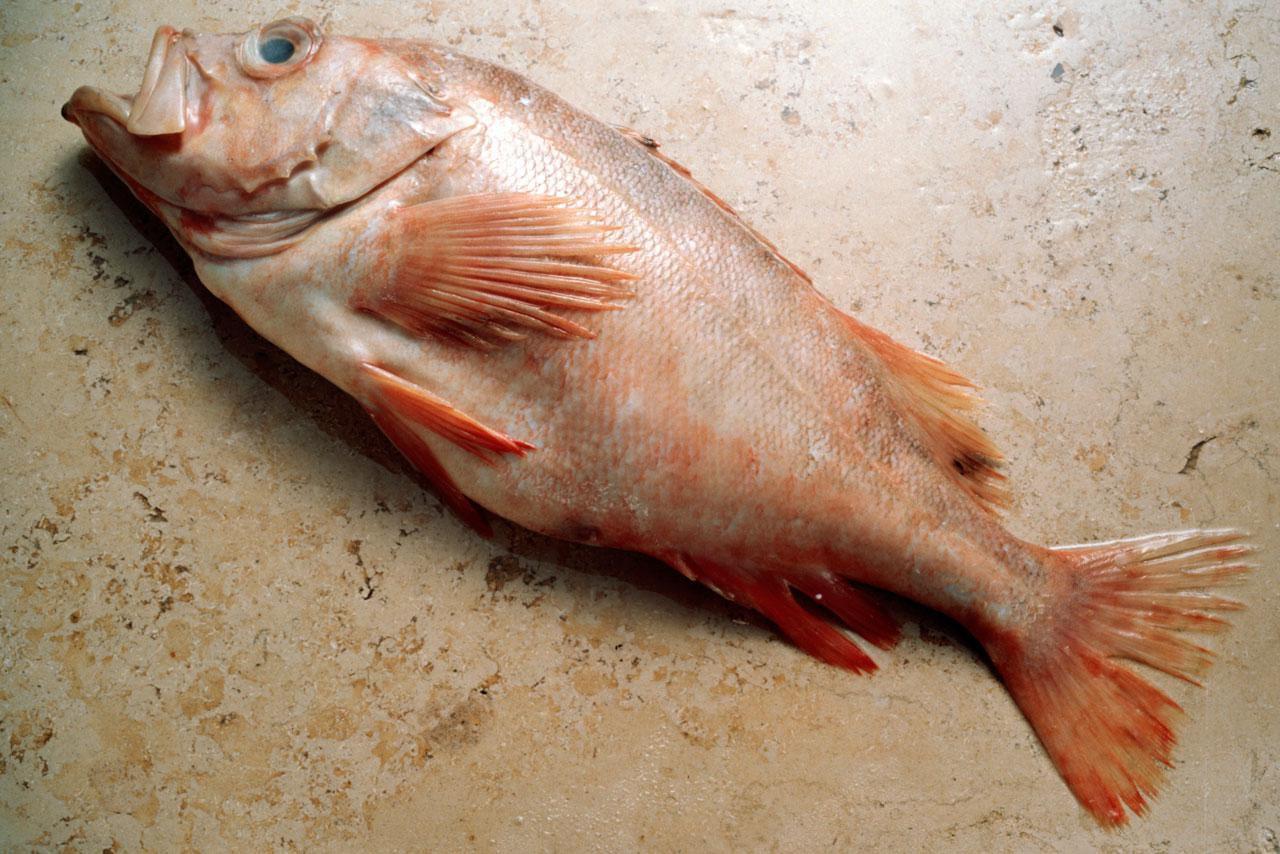 Best bait for redfish for Best fish bait