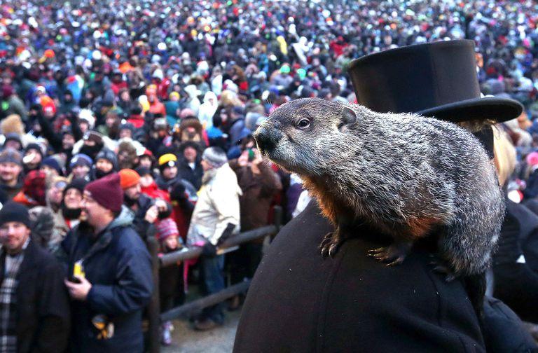 Punxsutawney Phil at the 127th Groundhog Day Celebration