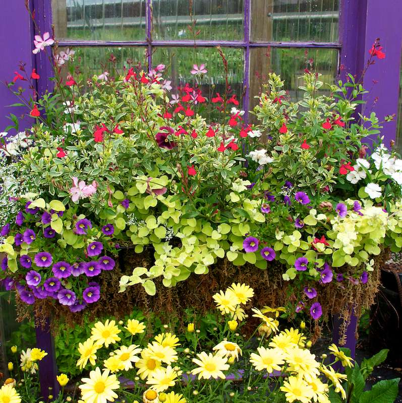 container gardening picture of full window box