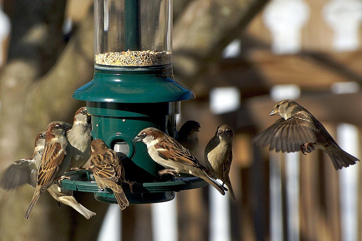 stop bully birds at your feeders