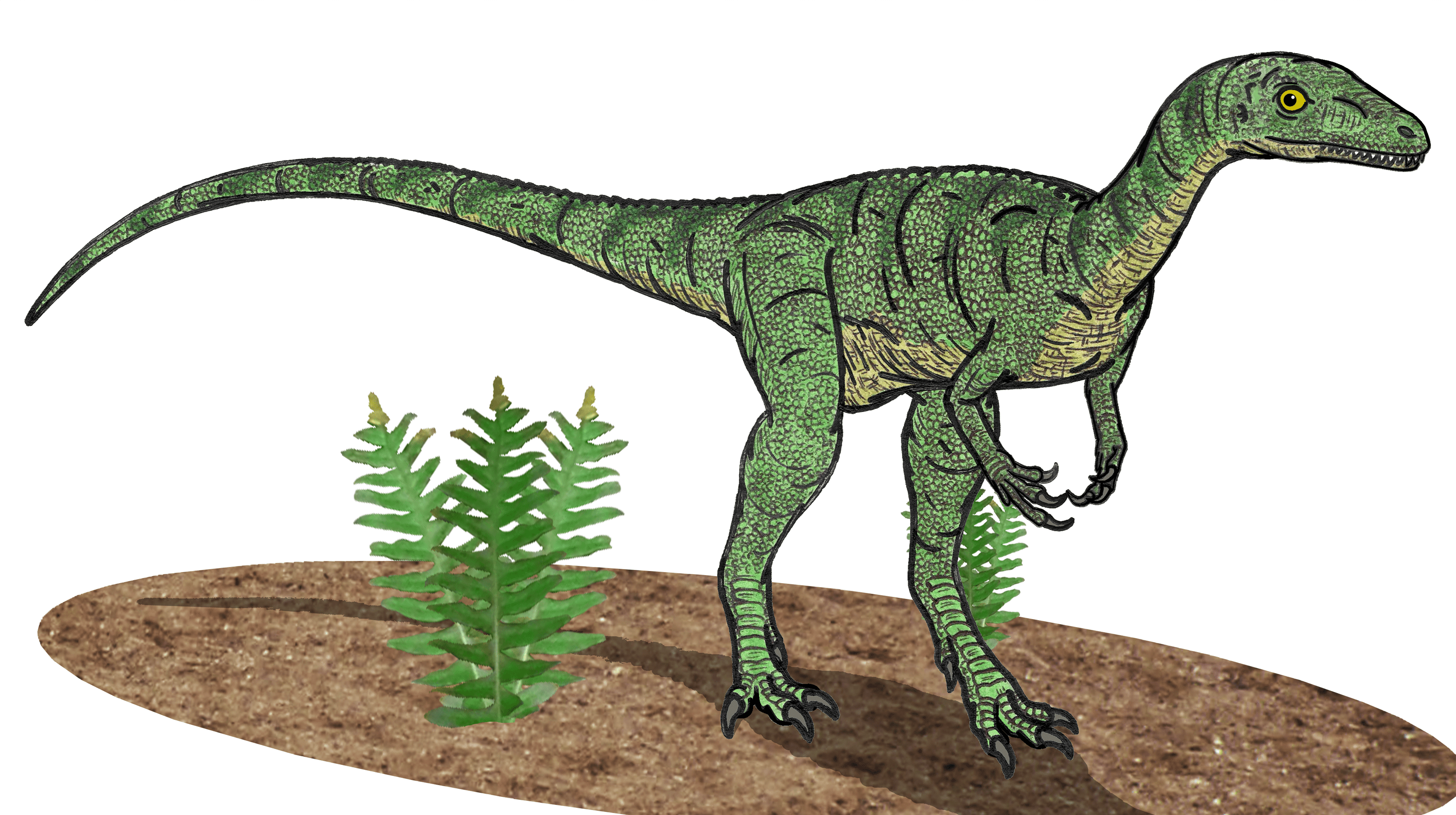 facts about eoraptor the world u0027s first dinosaur