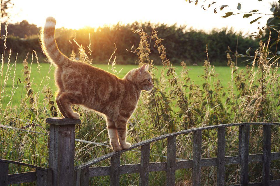 Cat walking on fence
