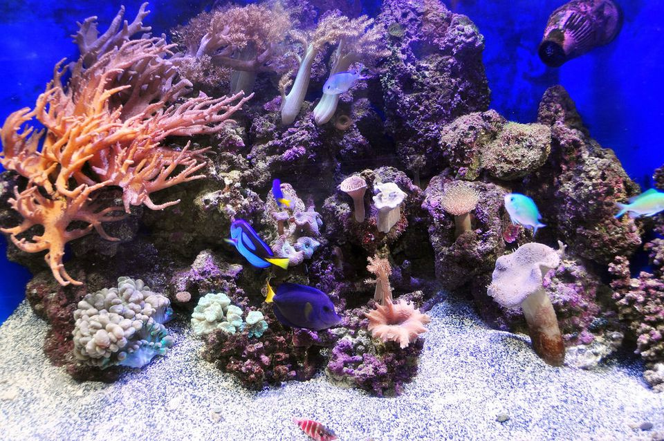 Cycling a new saltwater aquarium with live rock for Cycling a fish tank