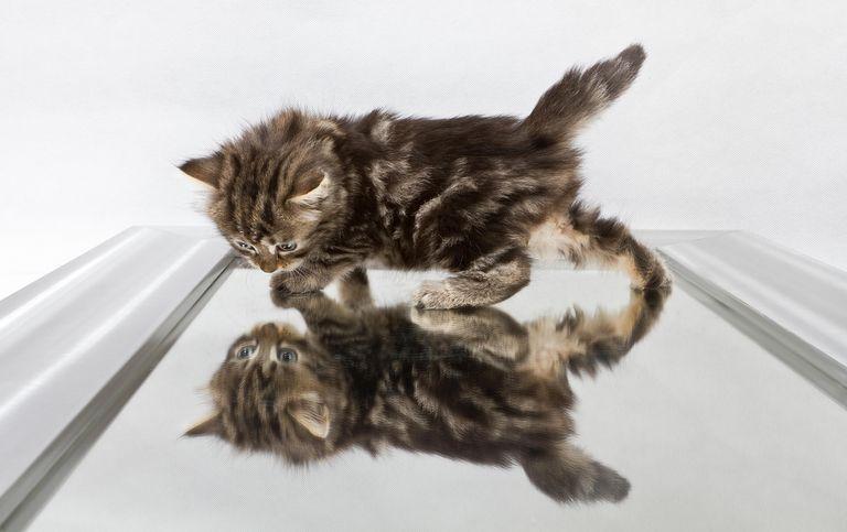 Cat in mirror.