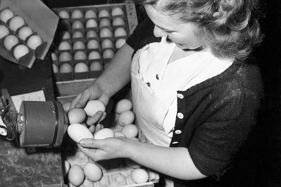 High angle view of a young woman candling eggs.