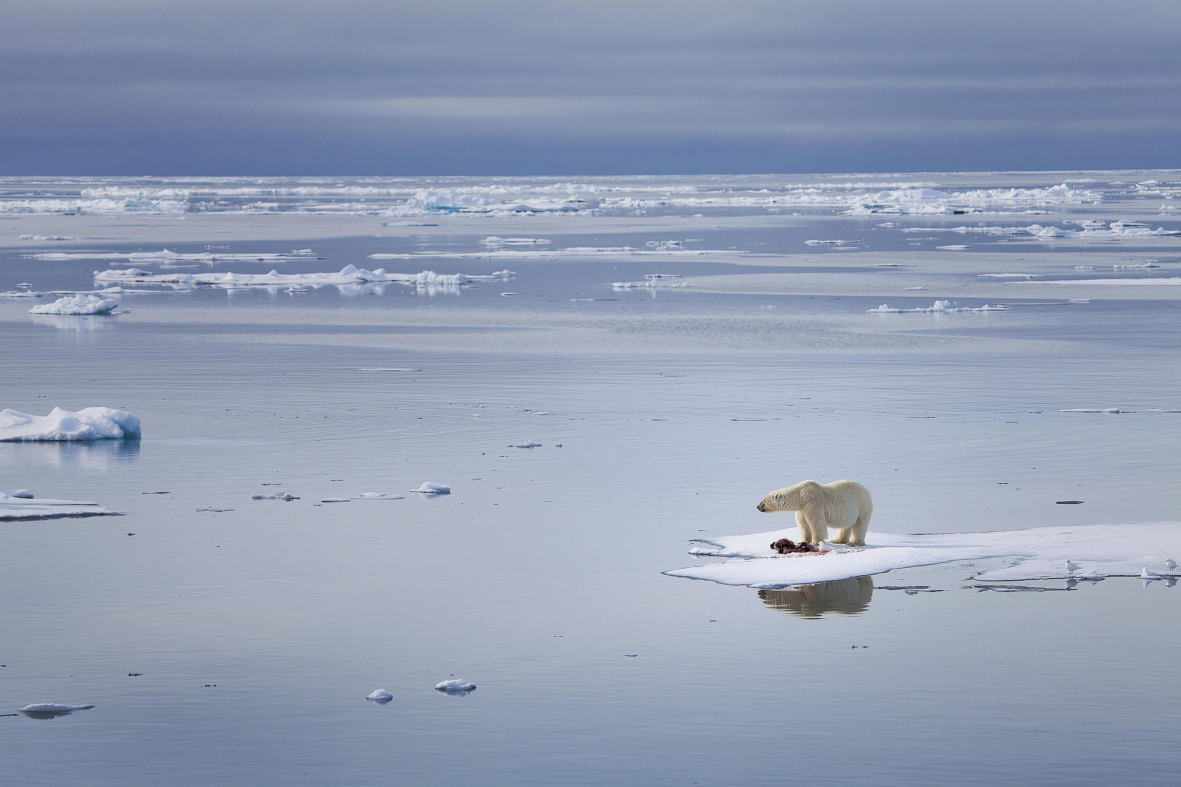 Global warming and its effect on marine populations could there be any advantages of global warming sciox Images